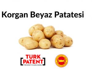 Korgan Beyaz Patatesi